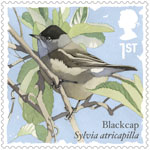Songbirds 1st Stamp (2017) Blackcap