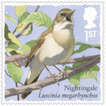 Songbirds 1st Stamp (2017) Nightingale