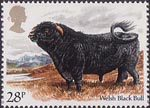 British Cattle 28p Stamp (1984) Welsh Black Bull