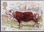 British Cattle 31p Stamp (1984) Irish Moiled Cow