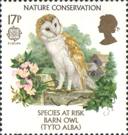 Image result for Endangered Species Poster