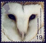Millennium Projects (1st Series). 'Above and Beyond' 19p Stamp (2000) Barn Owl (World Owl Trust, Muncaster)