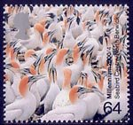Millennium Projects (1st Series). 'Above and Beyond' 64p Stamp (2000) Cape Gannets (Seabird Centre, North Berwick)