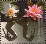 Millennium Projects (3rd Series). 'Water and Coast' 26p Stamp (2000) Frog's Legs and Water Lilies (National Pondlife Centre, Merseyside)