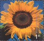 Millennium Projects (8th Series). 'Tree and Leaf' 1st Stamp (2000) Sunflower ('Eden Project, St. Austell)
