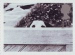 Cats and Dogs 1st Stamp (2001) Dog Behind Fence