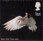 Birds of Prey 1st Stamp (2003) Barn Owl in Flight with Wings lowered