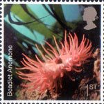 Sea Life 1st Stamp (2007) Sea Anemone