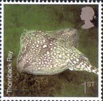 Sea Life 1st Stamp (2007) Thornback Ray