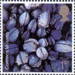 Sea Life 1st Stamp (2007) Mussel