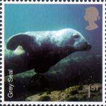Sea Life 1st Stamp (2007) Grey Seal