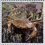 Sea Life 1st Stamp (2007) Shore Crab