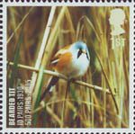 Birds 1st Stamp (2007) Bearded Tit