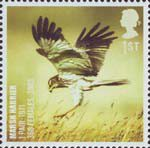 Birds 1st Stamp (2007) Marsh Harrier
