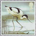 Birds 1st Stamp (2007) Avocet