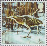 Birds 1st Stamp (2007) Bittern