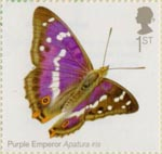 Butterflies 1st Stamp (2013) Purple Emperor