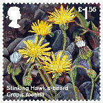 Reintroduced Species £1.55 Stamp (2018) Stinking Hawks-beard