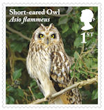 Owls 1st Stamp (2018) Short-eared Owl