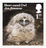 Owls 1st Stamp (2018) Short-eared Owl, juvenile