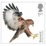 Birds of Prey 1st Stamp (2019) Buzzard