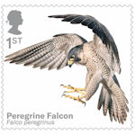 Birds of Prey 1st Stamp (2019) Peregrine Falcon