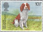 Dogs 10.5p Stamp (1979) Welsh Springer Spaniel