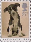 RSPCA 37p Stamp (1990) Puppy