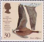 The Wildfowl and Wetlands Trust 1946-1996 30p Stamp (1996) White-fronted Goose