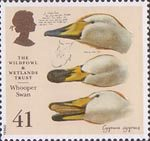 The Wildfowl and Wetlands Trust 1946-1996 41p Stamp (1996) Whooper Swan