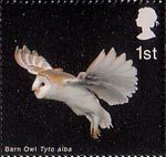 Birds of Prey 1st Stamp (2003) Barn Owl with extended Wings and Legs down
