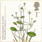 Plants - UK Species in Recovery 1st Stamp (2009) Floating Water-Plantain