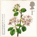 Plants - UK Species in Recovery 1st Stamp (2009) Plymouth Pear