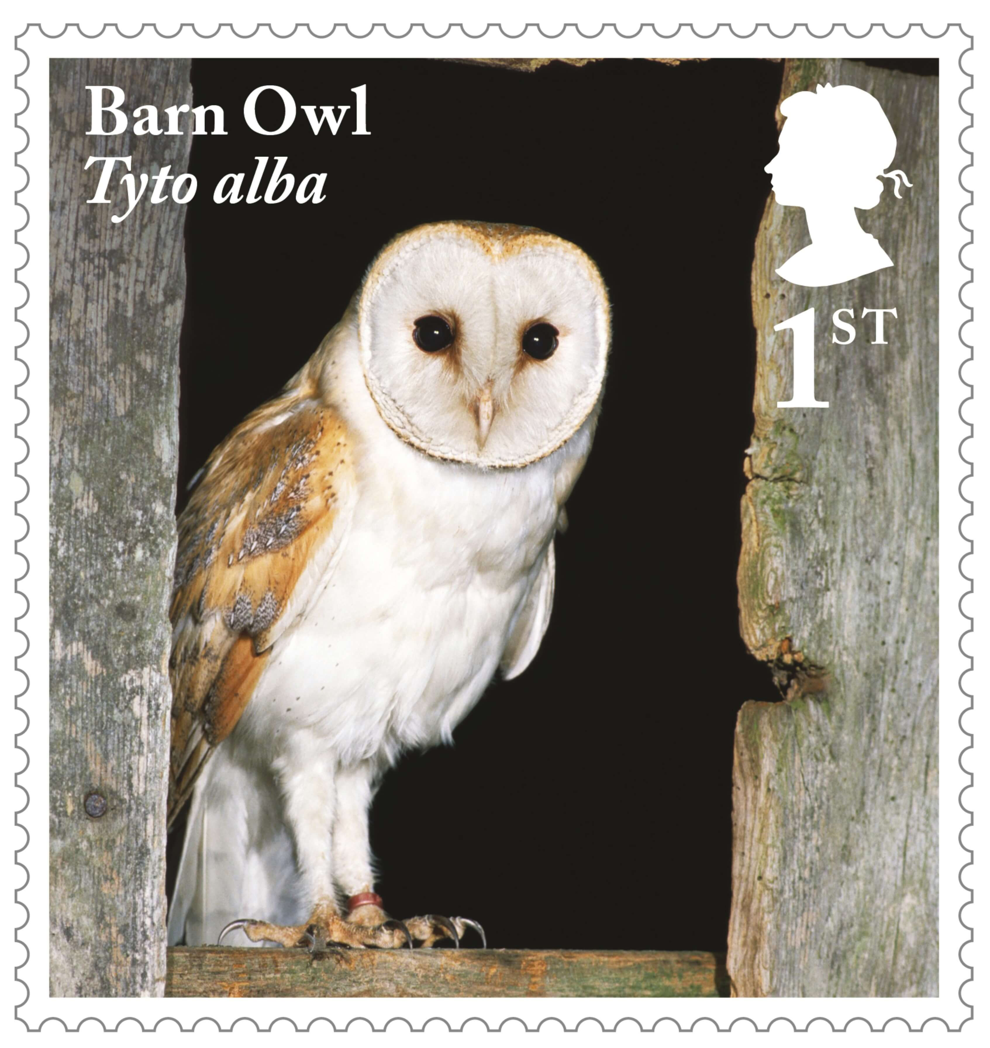 owls 2018 collect gb stamps