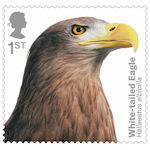 Birds of Prey 1st Stamp (2019) White-tailed Eagle
